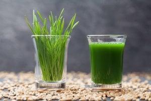 wheatgrass | Gundry MD
