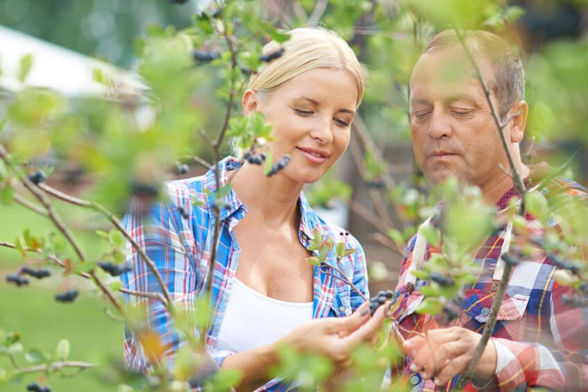 aronia berries | Gundry