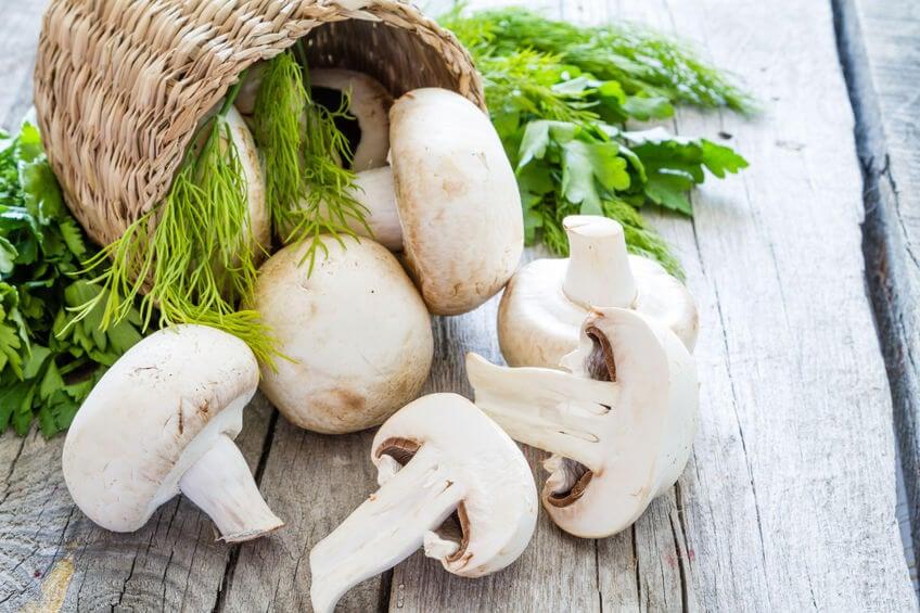 anti aging mushrooms