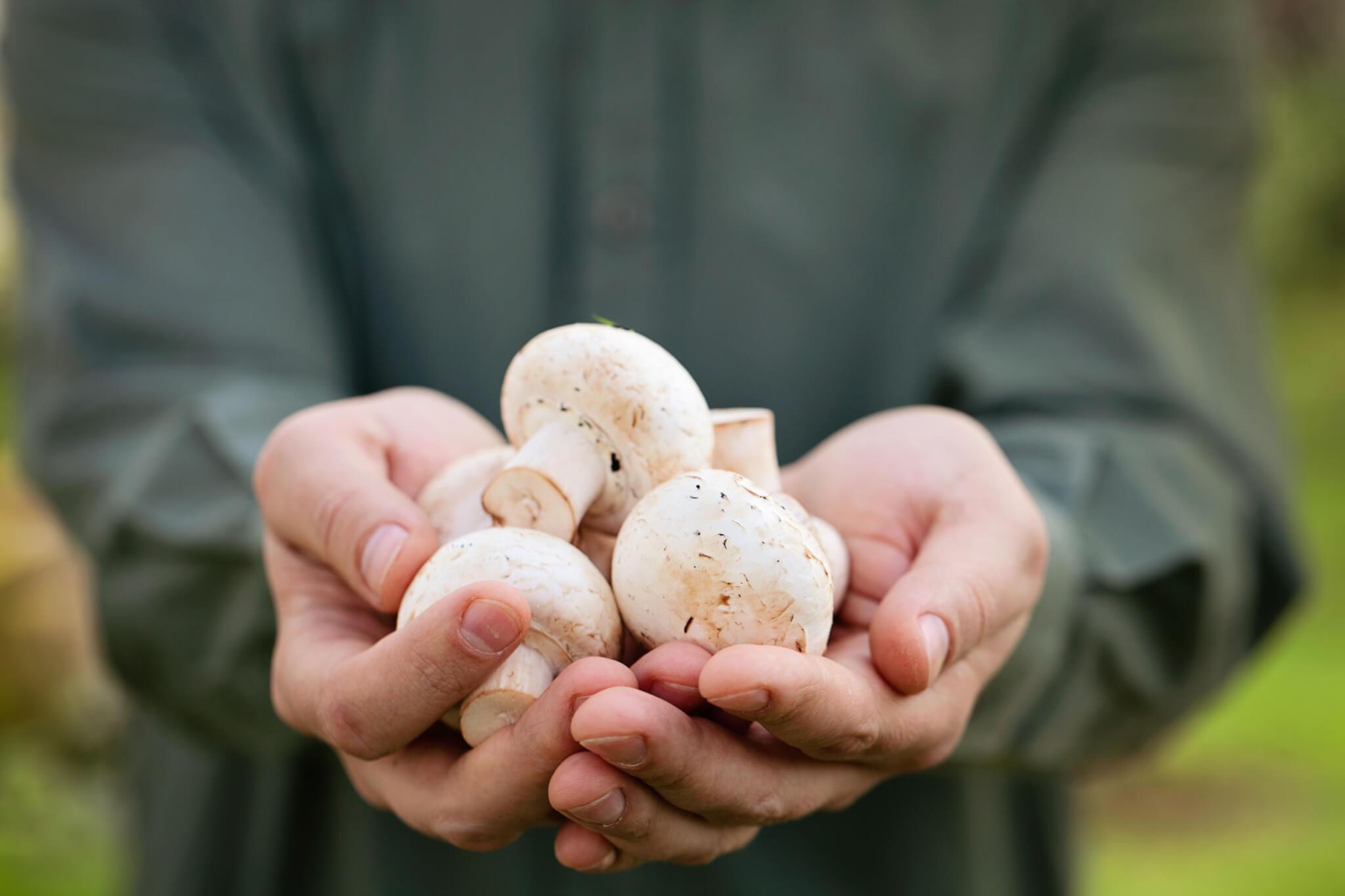Raw Mushroom Soup | Gundry MD
