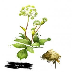 celery seed benefits | Gundry MD