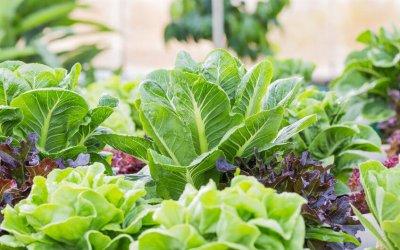 green leafy vegetables | Gundry MD