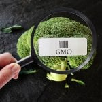 What Does GMO Stand For And Are They Dangerous To Your Health?