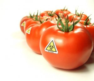 GMO tomatoes | Gundry MD
