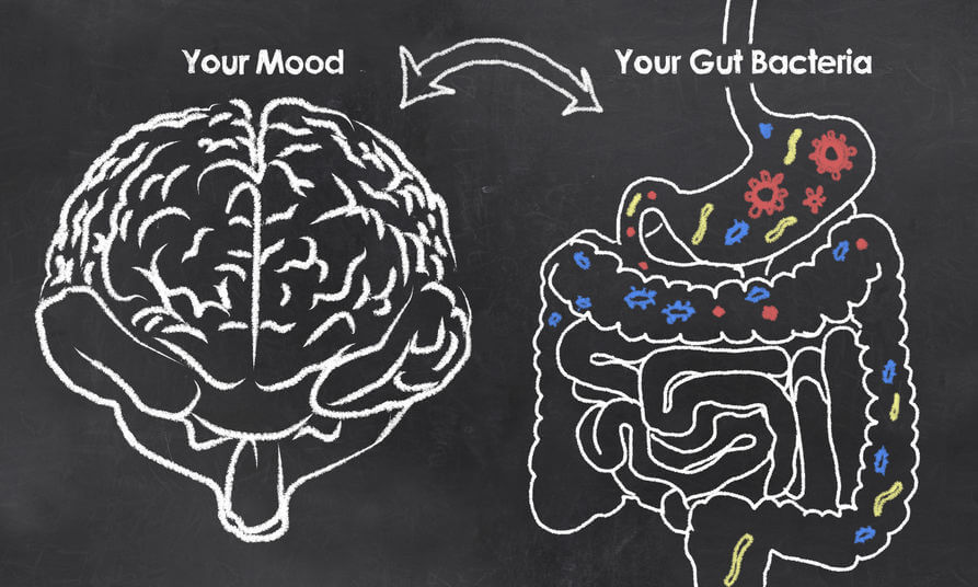 gut brain axis | Gundry MD