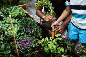 winter vegetables   Gundry MD