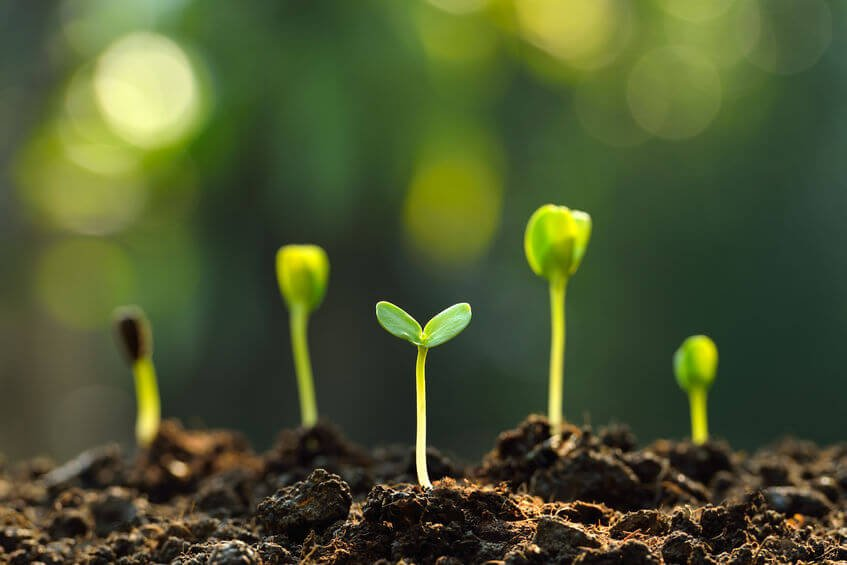 seedlings | Gundry MD