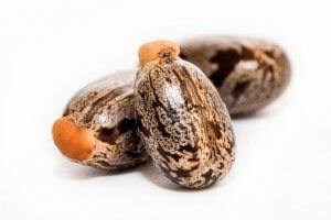 castor bean | Gundry MD