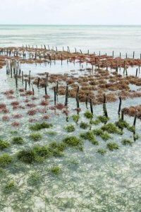 facts about seaweed | Gundry MD